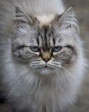 Next doors cat
