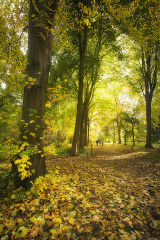 Autumn in Lime Walk