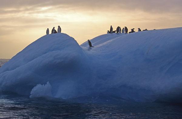 Blueberg Travellers