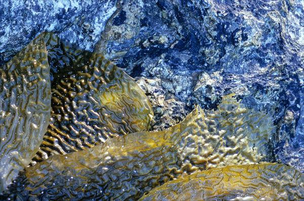 Seaweed and Granite