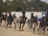 A day at the trotting races