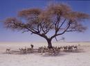 Etosha Wildlife Park, Namibia.