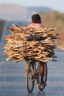 Cyclist going to market
