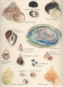 Shells of the Rocky Shore